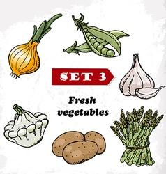 Set 3 fresh vegetables onions garlic squash vector