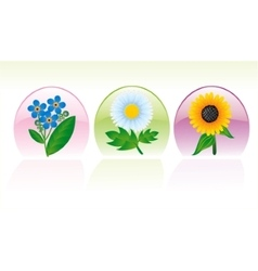 Set of three flower icons vector image