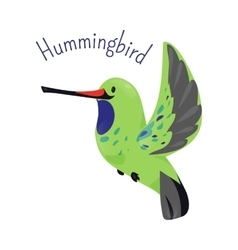 Hummingbird isolated on white background vector image vector image