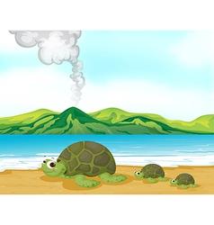 Cartoon Beach turtles vector image vector image