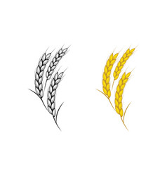 agriculture rice icon vector image