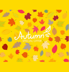 autumn special offer color fall leaves vector image