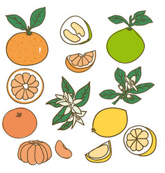 colored drawing organic food collection vector image