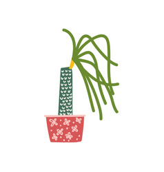 dracaena house plant growing in pot design vector image