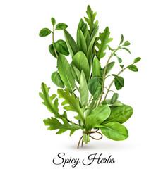 Fresh herbs realistic vector