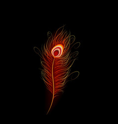 Peacock feather with black background vector
