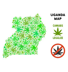 Royalty free cannabis leaves collage uganda map vector