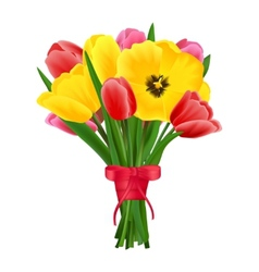 Tulip flower bouquet vector