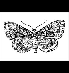 vintage engraving a butterfly vector image