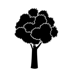 black tree silhouette foliage branch ecology image vector image vector image