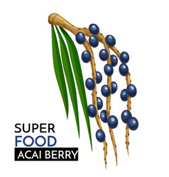Acai berry icon vector