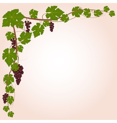 Grape decorative corner vector image