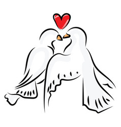 love birds on white background vector image