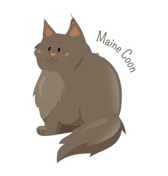Maine Coon isolated on white background vector image