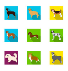 animal domestic dachshund and other web icon in vector image
