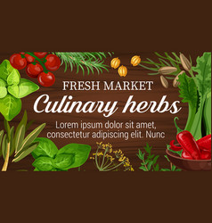 Culinary herbs from market banner with seasonings vector