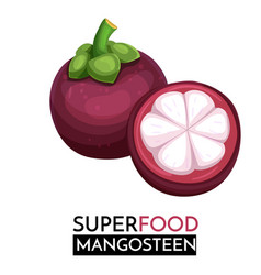 mangosteen icon vector image
