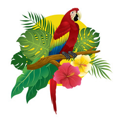 Red macaw sit on branch of tree vector