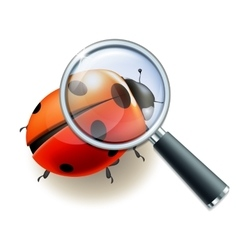 Magnifying glass and Ladybird vector image