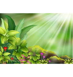 botanical plant view on sun light vector image