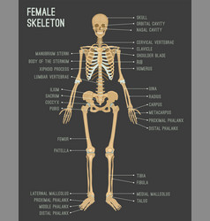 Female skeleton image vector
