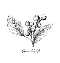 Hand drawn of orangeberry fruits on white backgrou vector