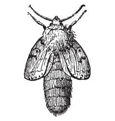 Moth just emerged vintage vector