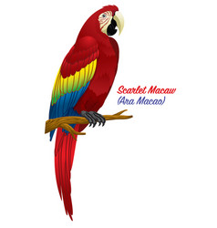 Red scarlet macaw bird vector