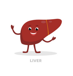 strong healthy liver cartoon character isolated on vector image