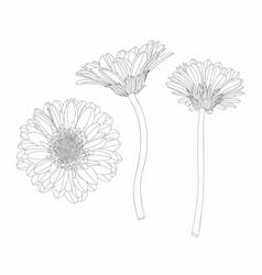 beautiful monochrome line gerbera flower vector image