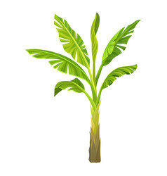 Cartoon of banana palm tree with big vector