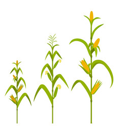 Growth stages from seed to adult plant vector