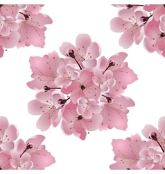 Japanese cherry Bouquet of pink cherry blossom vector image