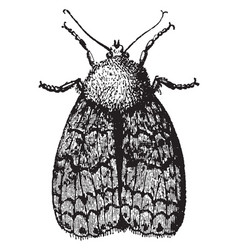 moth whose wings are developed vintage vector image