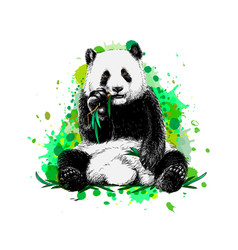 Panda sitting and eating bamboo from a splash vector