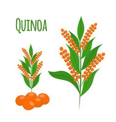quinoa set seeds healthy quinoa vegetarian food vector image