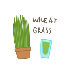 Wheat grass superfood vector