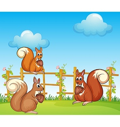 Cartoon Squirrels vector image