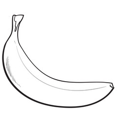 one unopened unpeeled ripe banana sketch style vector image