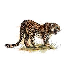 portrait a leopard from a splash watercolor vector image