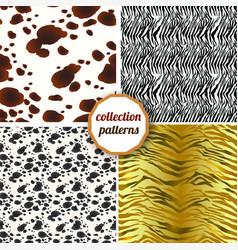 set of seamless patterns of tiger skins zebra vector image