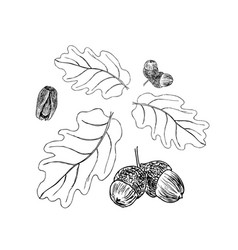oak branch with leaves in black ink stages art vector image vector image