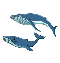 Blue whales swimming underwater vector image