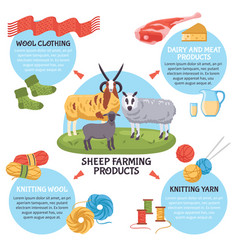sheep breeding infographics vector image vector image