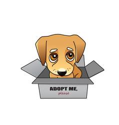 dog adoption concept vector image