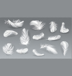 3d realistic set white feathers vector image
