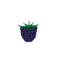 Dark purple blackberry berry flat icon isolated vector