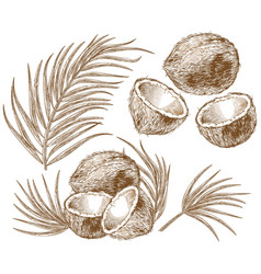 engraving coconut and palm leaves vector image