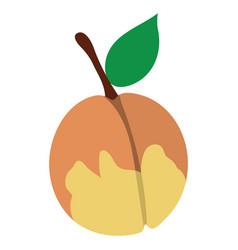 Flat design icon of peach in ui colors vector