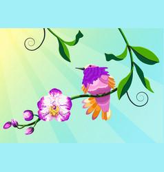 Hummingbird bird orchid vector